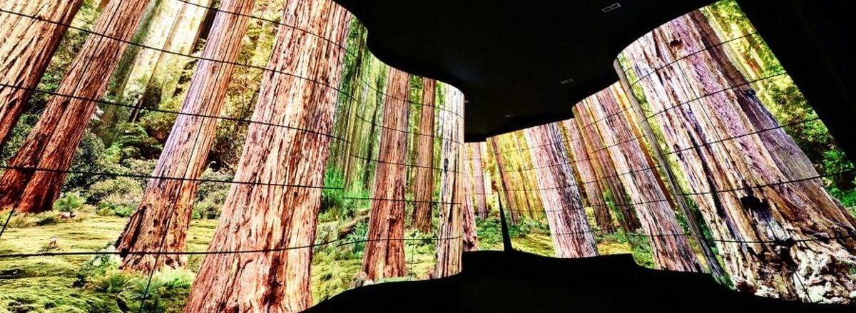 LG OLED Canyon - kaňon z displejů (veletrh CES 2018)