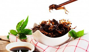 Hmyz je zdroj proteinů, má jich víc než maso
