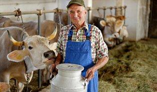 Dříve byly mléčné výrobky kvalitnější. Říká kdo?