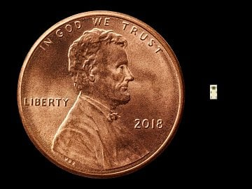 Miniaturní štěnice v porovnání s mincí