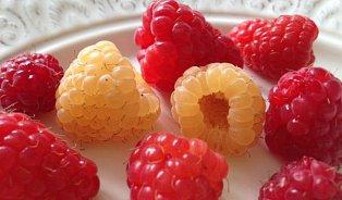 Jak vkuchyni využít maliny? Pečte je sbůčkem