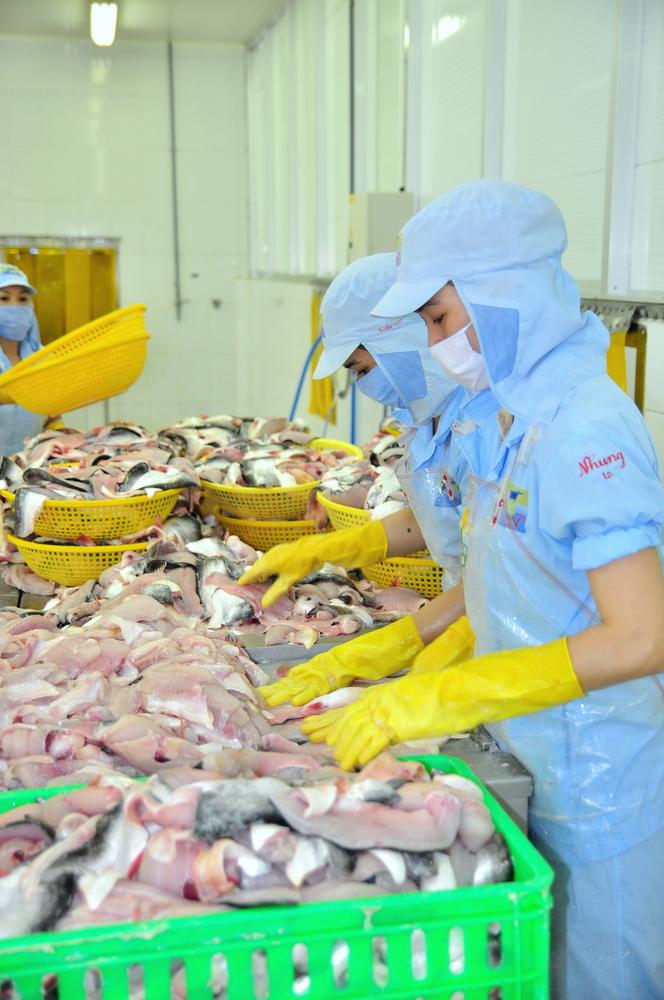 Takhle se zpracovávají mořské plody ve Vietnamu