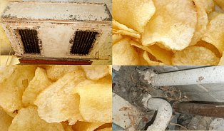 Chipsy ze Skalice vznikaly ve špíně aplísni