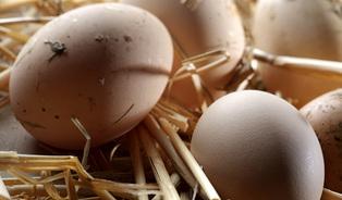 Že je vejce bio, nepoznáme ani my, říká šéf veterinářů
