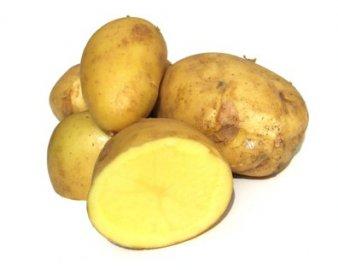 krize brambory