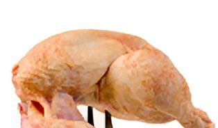 Salmonely je u lidí pětkrát méně - díky drůbeži