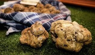 Vitalia.cz: Ošklivá brambora? 2. nejdražší potravina světa