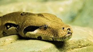 Python had