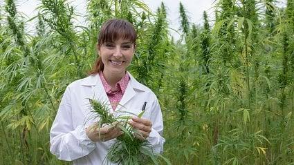 Vitalia.cz: Konopí je lék. Vědci mění pověst marihuany
