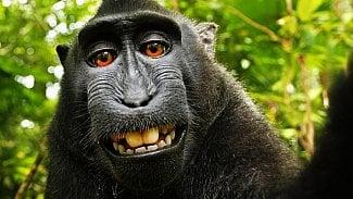 Root.cz: Soud o selfie je u konce, opice není autorem