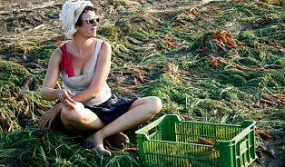 Proč se tuny české zeleniny zaorávají? Nejsou dokonalé