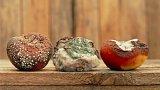 Svaz obchodu se kvůli kvalitě potravin obul do potravinářské inspekce
