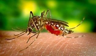 Vitalia.cz: Očkování proti žluté zimnici: jednou stačí