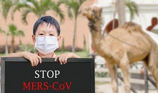 Nebezpečný koronavirus MERS přenášejí velbloudi