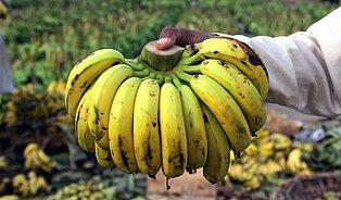 Banány, jak je známe, likviduje plíseň