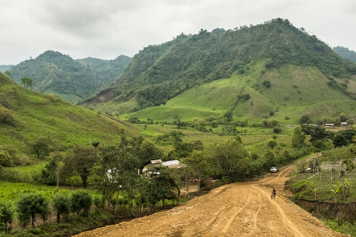 Pěstování kakaových bobů v Ekvádoru