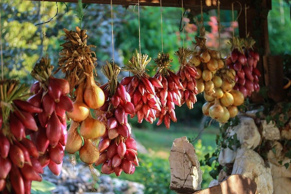 Skladování cibule z vlastní zahrady