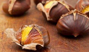 Jedlé kaštany ze starých herbářů překvapí