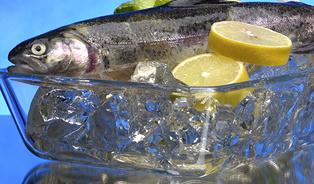Polsko má desítky intenzivních chovů sladkovodních ryb, mydva