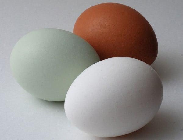 Které vejce by jste si vybrali?