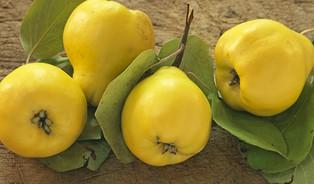Netradiční plody: kdoule, mišpule aspol.