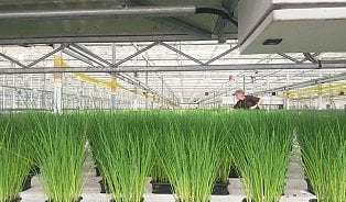 Jak se pěstují bylinky do supermarketů