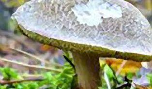 Plesnivé babky rakovinu nezpůsobí aneb nesmysly o houbách