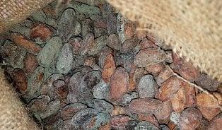 Vitalia.cz: Nechutné kakaové boby. Chcete znich čokoládu?