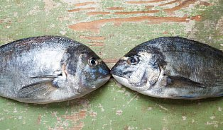 Poznáte zčerstvělou rybu od čerstvé?