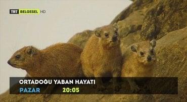 TRT Belgesel HD.