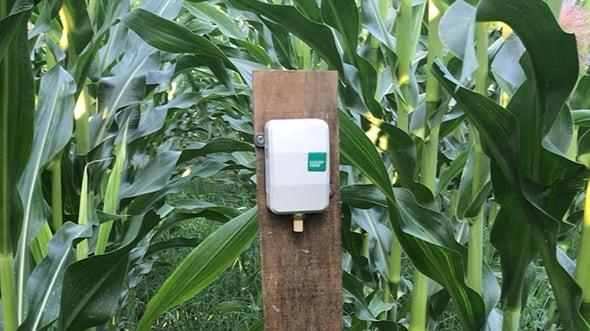 [aktualita] Češi budují síť pro internet věcí v Srbsku, digitalizují pěstování kukuřice