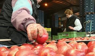 Česká jablka = drahá jablka? Cenu nezvedá zahraniční konkurence