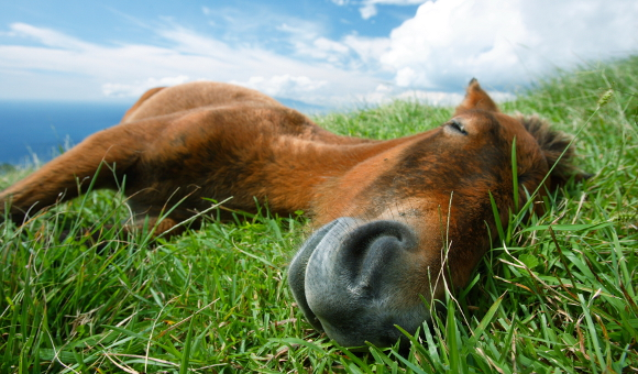 Koňské maso vám neublíží, problémem současné kauzy je klamání spotřebitele