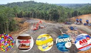 Jak se vyhnout palmovému oleji?