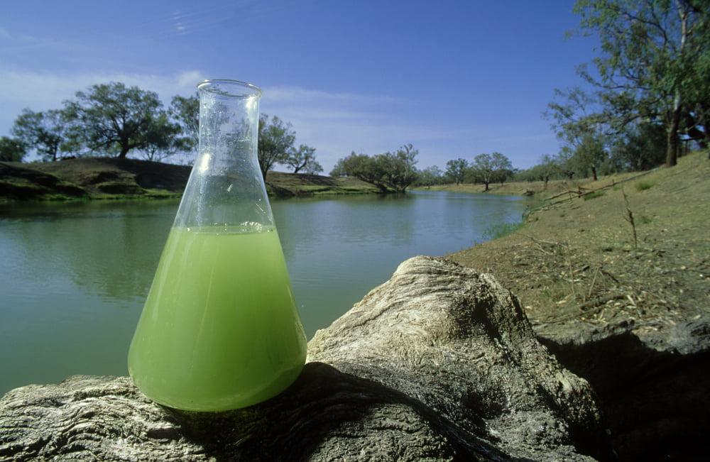 Zelená voda nerovná se sinice, mohou to být jen řasy