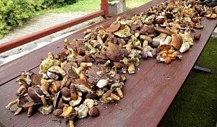 Opravdu lze zamrazit isyrové houby?