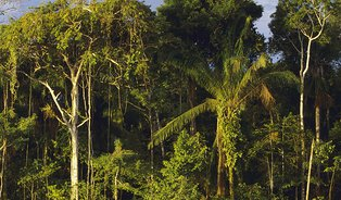 Léčivé rostliny amazonského pralesa