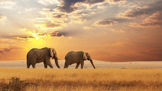 PostgreSQL sloni