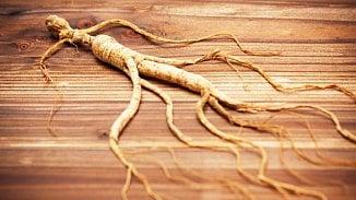 120na80.cz: Kořen ztajgy je silný antioxidant