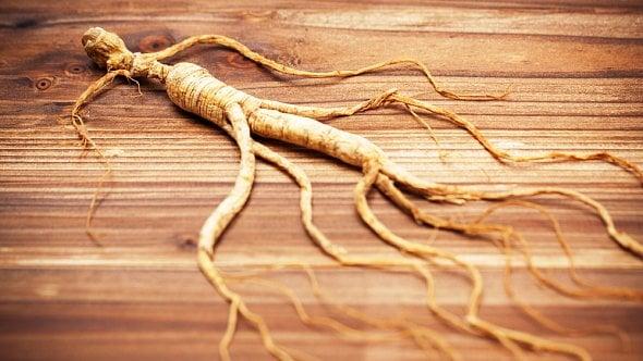 Ženšen a jeho účinky: kořen ztajgy je silný antioxidant