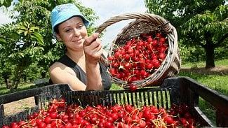 Farmářské trhy získávají popularitu. Přesto je třeba dát si pozor