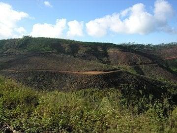 Ve Svazijsku i v JAR je vidět hodně monokulturních lesů uměle sázených na dřevo.