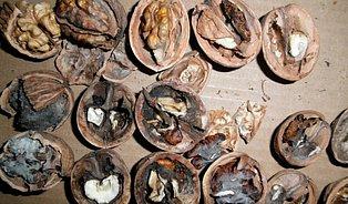 Obchody opakovaně prodávají nebezpečné ořechy
