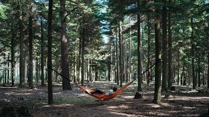 Vitalia.cz: Léčba lesem na předpis? Děláte si legraci?