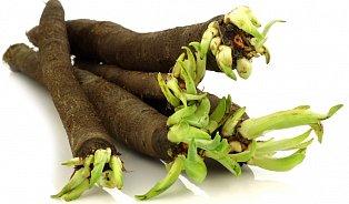 Černý kořen svědčí především žlučníku, játrům a slinivce