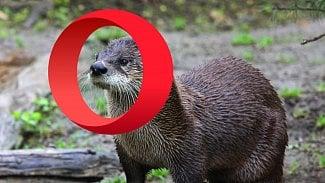 Otter: nadějný restart klasické Opery