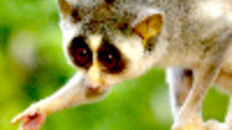 Útok Slowloris aneb plíživé nebezpečí pro web servery - Root cz