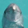 Ilustrační obrázek: Uklidňující pohled na delfíny
