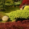Ilustrační obrázek: Chcete mít okolo domu překrásnou zahradu?