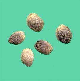 Konopná semínka